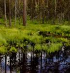 Pantanal ruso