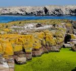 Islas Farne