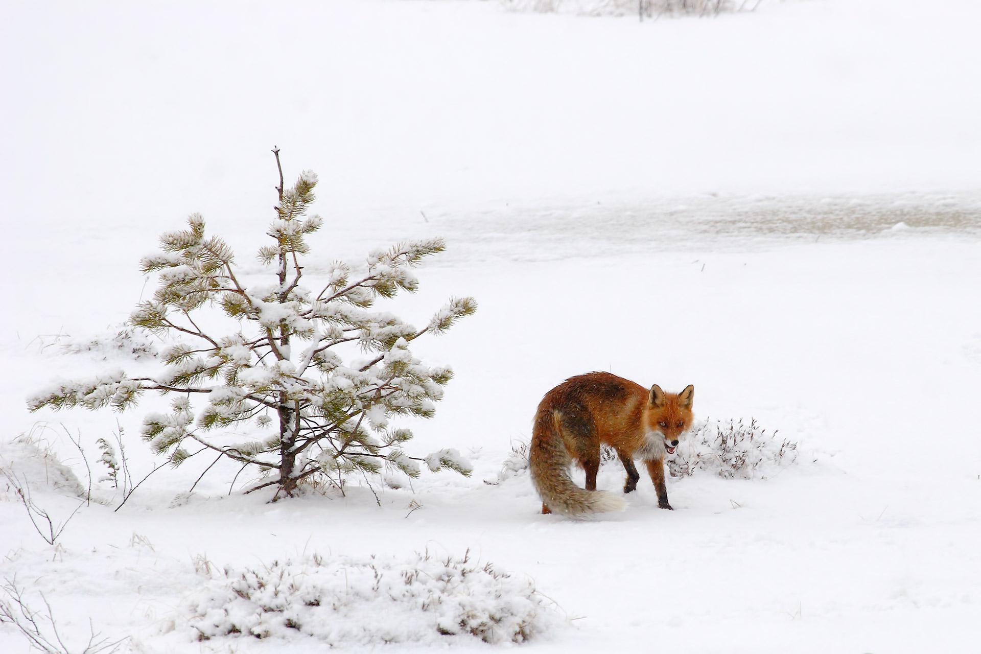 Finlandia – Finland