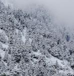 Duro invierno