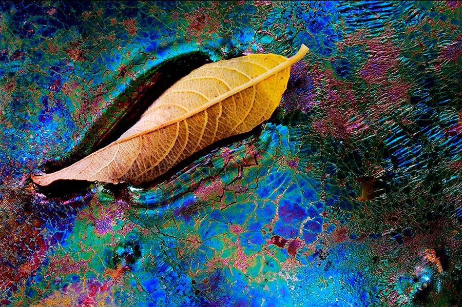 Un mundo desconocido de colores