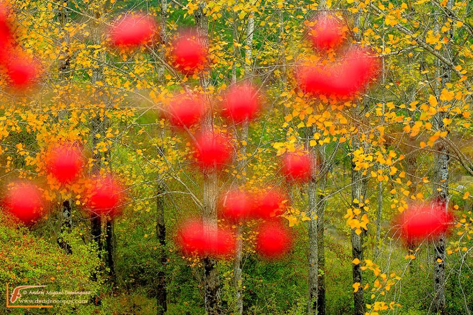 Contrastes de otoño