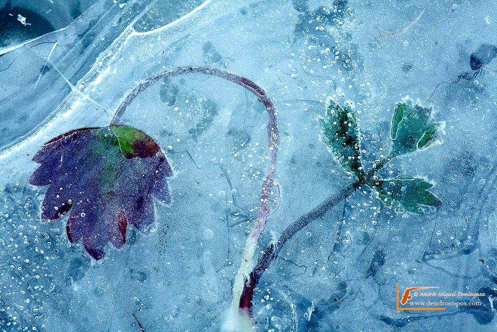frozenleaves