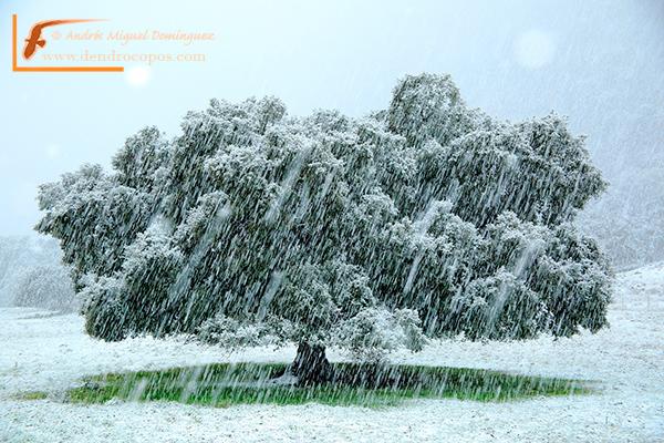snowstormMML