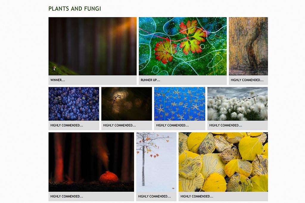 Plants and fungi
