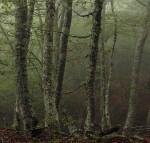 El bosque mágico