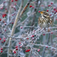 Aves en invierno – Birds in Winter