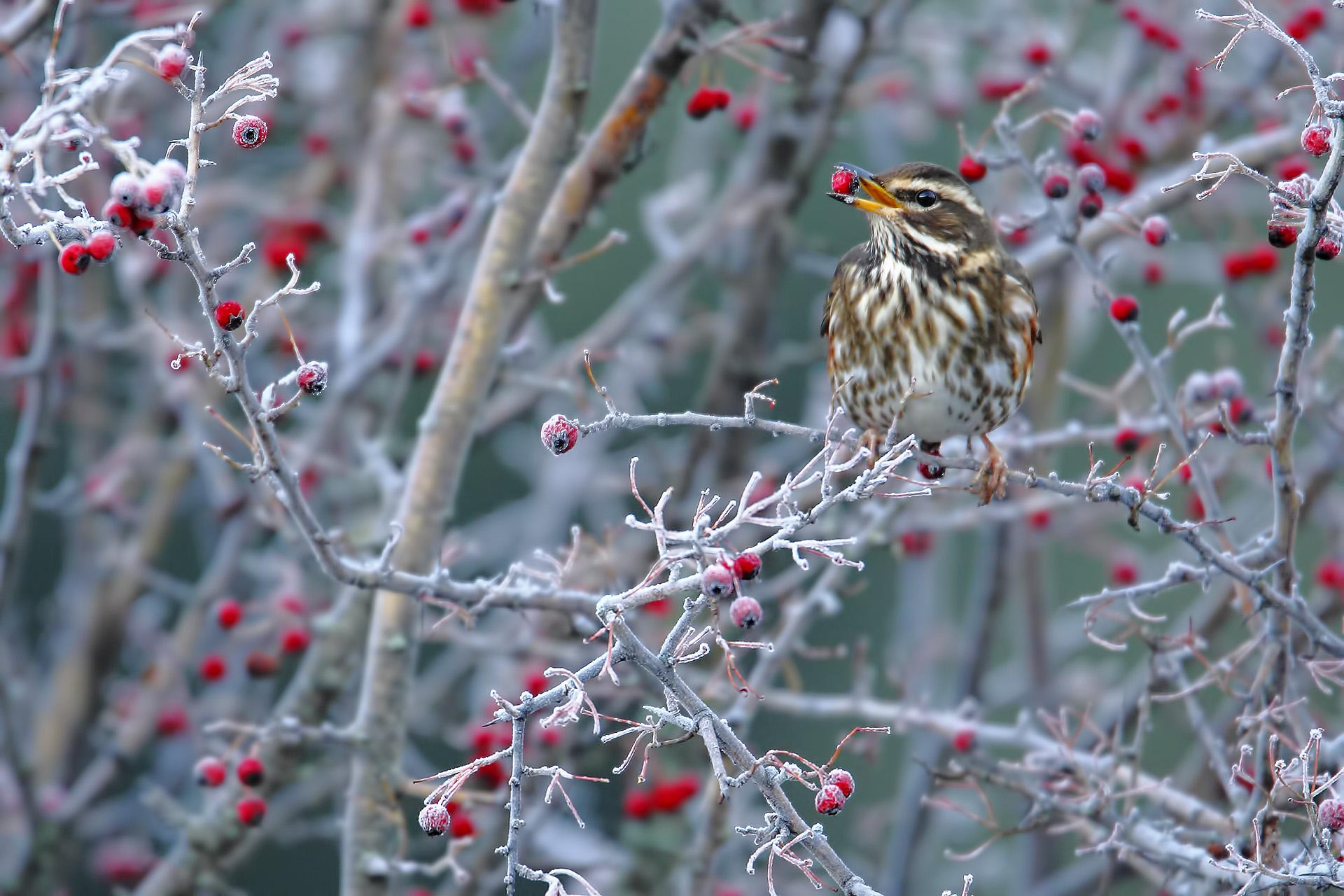 Aves en invierno – Birds in Winter