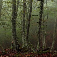 Cordillera cantábrica – Cantabrian mountain range