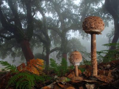 Hongos – Fungi
