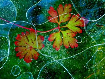 Flora – Plants