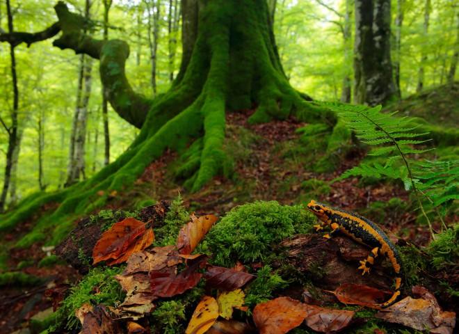 Anfibios – Amphibians