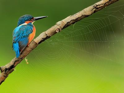 Aves – Birds