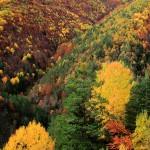 Pinceladas de otoño
